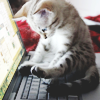 [ animals ] cat on laptop