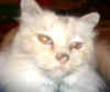 Mooncat close-up