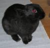 gir_the_bunny userpic