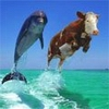 live_dolphins userpic