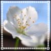 emarrling userpic