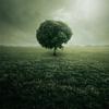 дерево зелёное в тумане