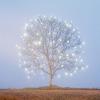 дерево волшебное