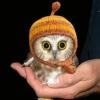 hat, owl
