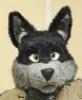 fursuit, arlo, mascot, wolf