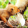 follow the leader foxes