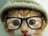кошак, рЫжЫй, кот в очках