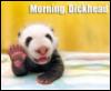 morning, dickhead