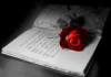 Book, Rose, Dark