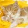 Котенок спящий