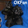 OKFan2