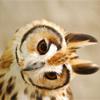 owl headtilt