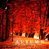 autumn, leaves, fall
