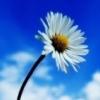 Небо и цветок
