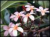 olgamam userpic