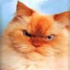 stroyu_dom userpic