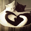 Animals - Yin and Yang.