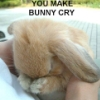 crying bunny upset