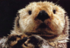 otterfaces userpic