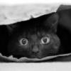 Кот-шаверма