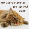 Katherine: Kitten [Get up and go got up and went]