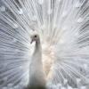 decorative_bird userpic