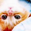 dawnfrost userpic
