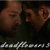 deadflowers5: Dean/CasBB