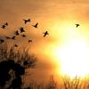 C.: fall golden sunset birds