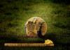 perfectfootball userpic