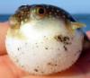 lady_blowfish userpic