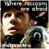 raccoons - Ryan