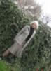 pic#113698638 плющ вечнозелёный