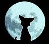 ночной кот