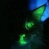 Glow in the Dark Kitteh