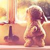 marys_angel: rabbit window