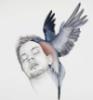 birds&faces