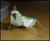 insect_raiser userpic