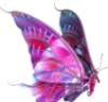 бабочка сиреневая