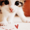 Jennifer: Cute Kitten