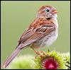 rt_sparrow