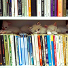 Kittens on a bookshelf