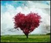 Сердце..дерево