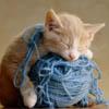 kitty yarn