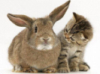 rabbit_cat_brown_2