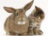 rabbit_cat_brown_2