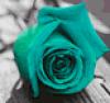 tigerchild521 userpic