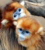 monkeyforlove