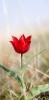 shiz_ksenya userpic