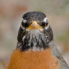 Xray Is As Xray Does: badass robin